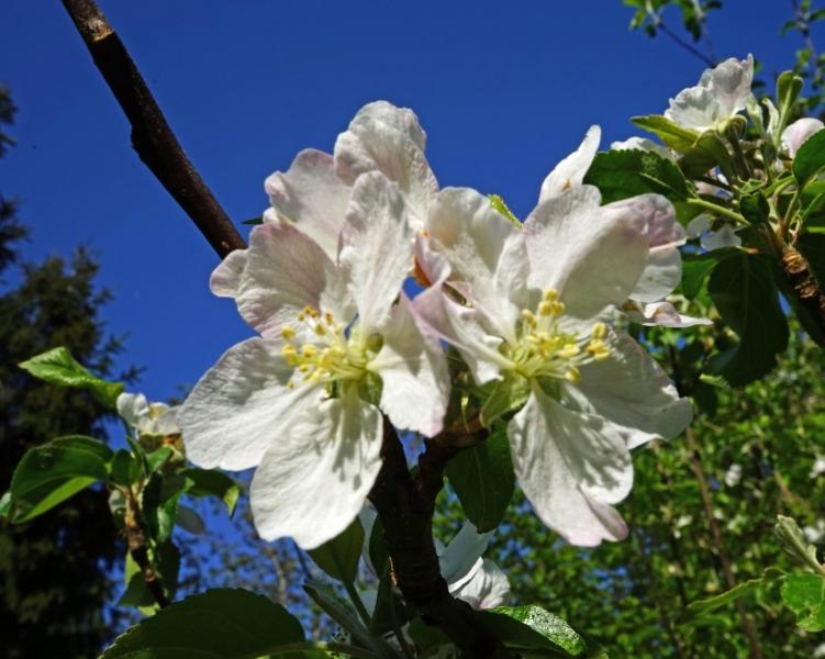 Blüten, Blumen, Buesche, Baeume