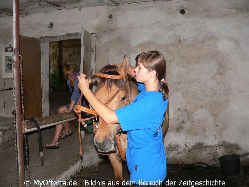 Um ein guter Tierarzt zu sein, muss man Tiere lieben