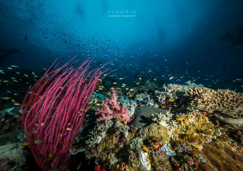 Unterwasserlandscahft - Raja Ampat